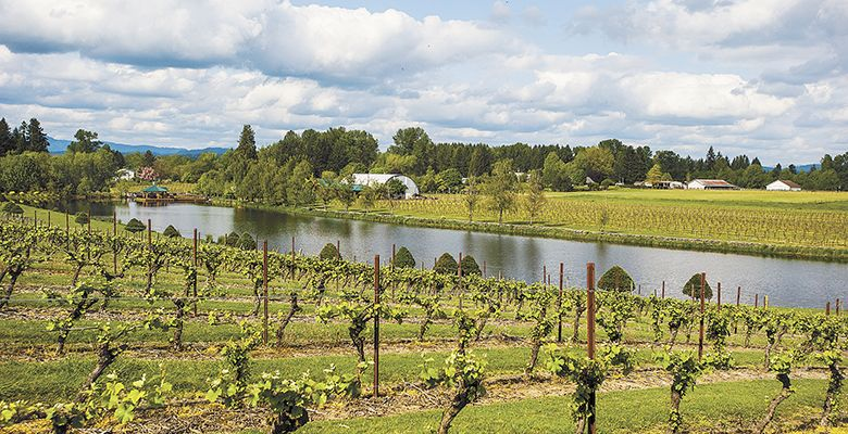 Bethany Vineyards' private lake makes for a beautiful backdrop for the vines.##Photo by Del Munroe