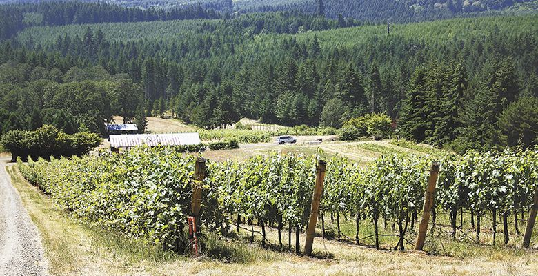 Woodhall Research Vineyard is currently undergoing significant improvements, including the planting of a new 2-acre Pinot Noir block.##Photo provided