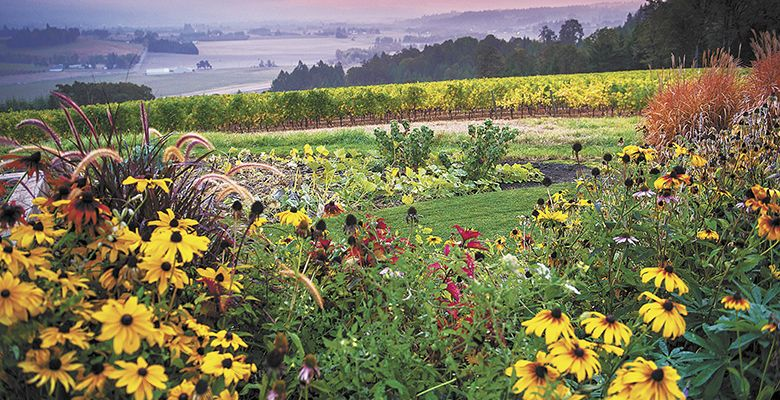 Penner-Ash Estate Vineyard, Yamhill-Carlton AVA, incorporates flowers and a