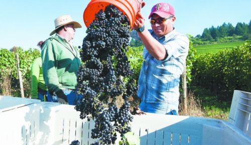 Harvest starts