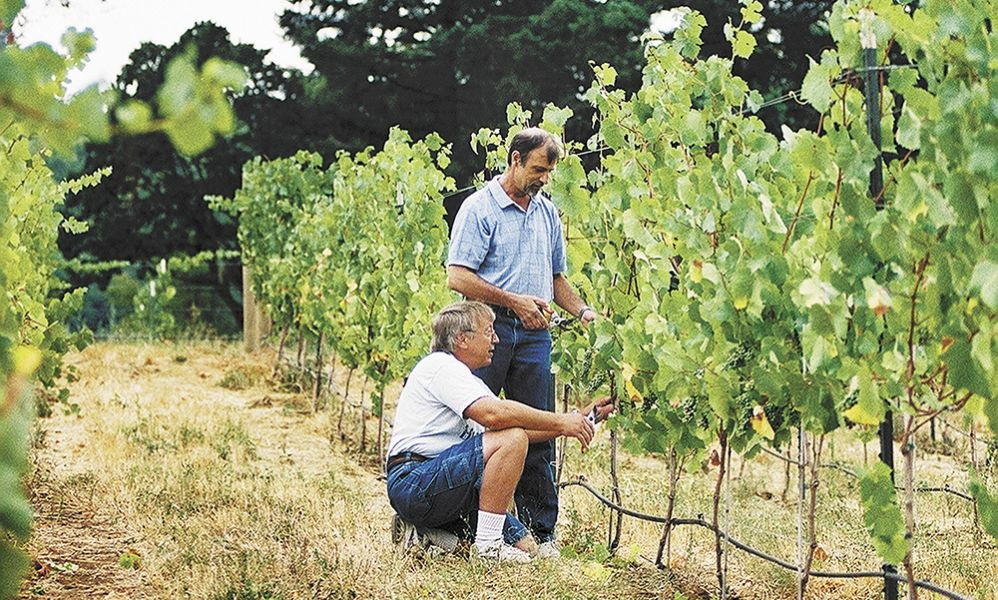 Al MacDonald helps a student prune vines in Chemeketa's eight-acre test vineyard that he helped establish and maintain since 2001. The vineyard is planted to Pinot Noir, Pinot Gris, Pinot Blanc, Riesling, Viognier, Gamay Noir, Chardonnay, Sauvignon Blanc, Syrah and Tempranillo.##Photo provided