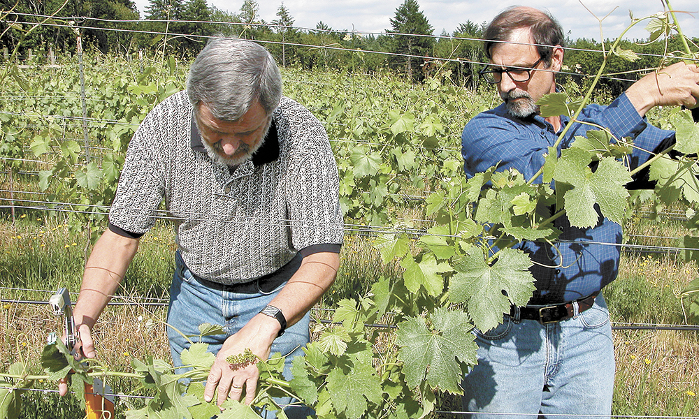 Al MacDonald (right) teaches a student how to properly train vines during a viticulture class at Chemeketa.##Photo provided