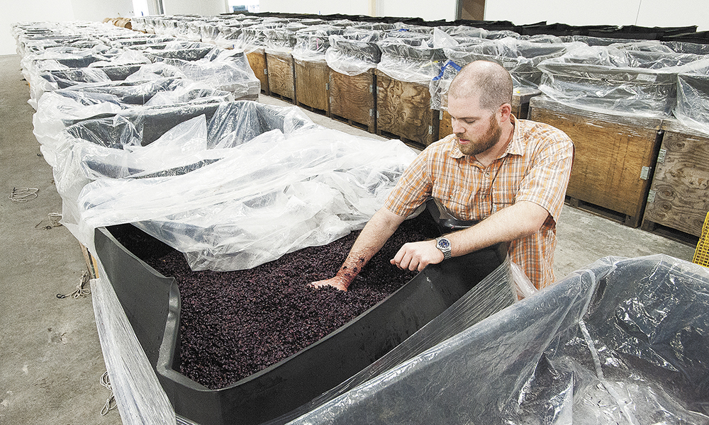 Argyle head winemaker Nate Klostermann inspects Pinot Noir grapes beginning cold soak, a process that enhances flavor and promotes extraction of desirable compounds prior to fermentation.##Photo by Marcus Larson