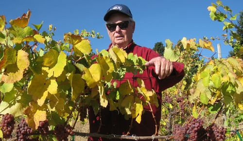 Longtime vineyard manager Rick Ensminger stands in a block of Gewürztraminer at Celilo Vineyard in the Columbia Gorge AVA.##Photo by Stuart Wa tson