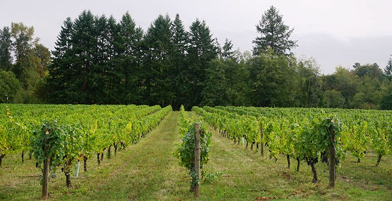 On a south-facing slope in La Center, Washington, Pinot Noir vines have stood patiently for 32 years. Now, under the care of one industrious couple, they are thriving.##Photos by Viki Eierdam