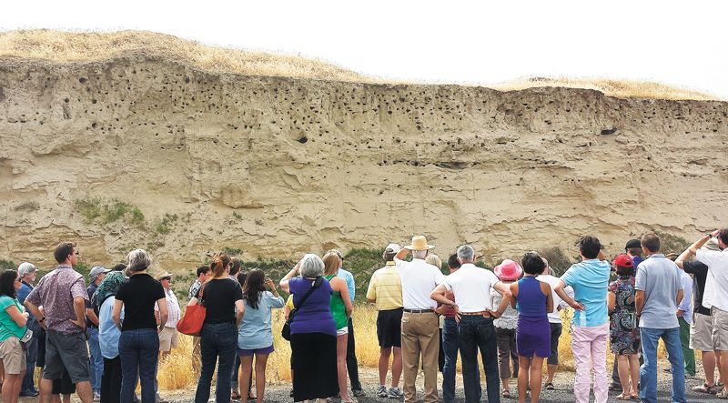 The soil profile typical of the lower elevations of Seven Hills Vineyard. The top three feet (where bird nesting holes are concentrated) is wind-deposited silt (loess). The crudely stratified material below is sand and silt layers deposited by the Missoula Floods around 15,000 years ago. ##Photo by Carla Bitter