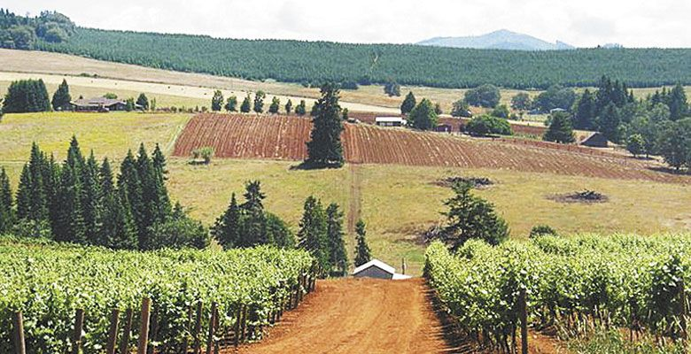 Red Hill Vineyard is the only vineyard located inside the Red Hill Douglas County AVA, which is located within the Umpqua Valley AVA.  ##Photo Provided
