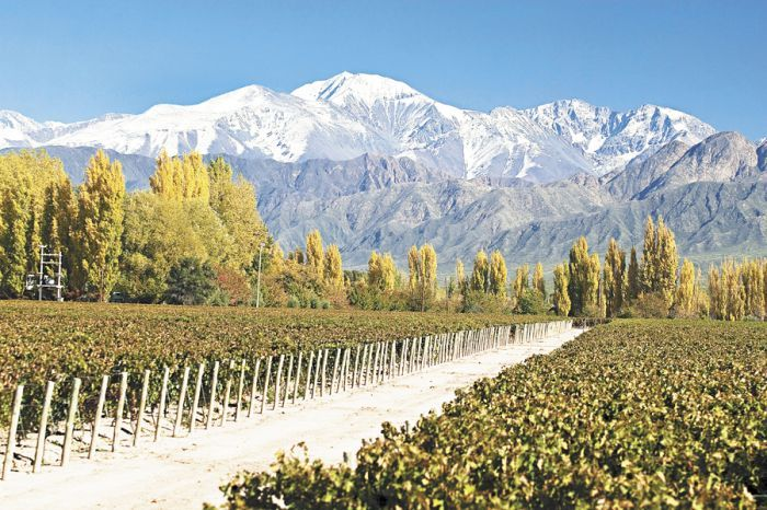Las Compuertas is a wine-producing region on the edge of the Andes foothills in Mendoza. Its location at the opening of the Mendoza River makes it one of the cooler growing areas in Argentina. Soft, lush reds are produced here from old Malbec vineyards, some up to a century old.