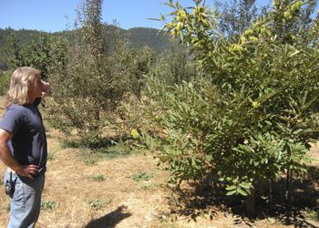 Bill Steele, co-owner of Cowhorn Vineyards &