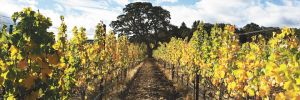 Andante Vineyard is located in the heart of Van Duzer. ##Photo provided.