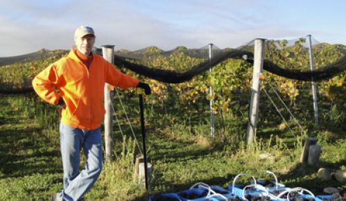 Peter Rosback helps with harvest at Pisa Terraces Vineyard in Central Otago.  Rosback bottles and sells a New Zealand wine under his Sineann label.  Photo provided.