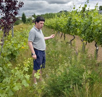 Winemaker Gilles de Domingo stands in a test plot where they are allowing cover crop to grow untouched at Cooper Mountain Vineyards in Beaverton.