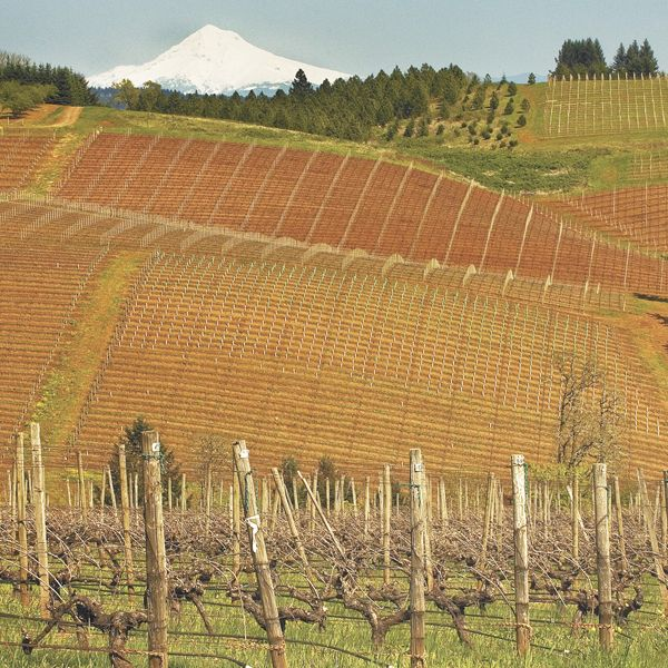 Knudsen Vineyard contains old vines and a view of Mount Hood in the Dundee Hills AVA.Photo by Andrea Johnson