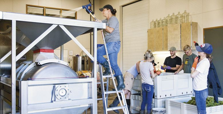 Students work during harvest in the Chemeketa Cellar's winery in Salem. ##Photo provided
