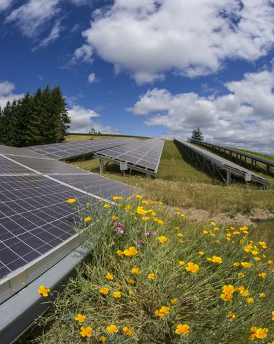 Domaine Drouhin Oregon was one of the first Oregon wineries to install solar panels.  Photo by Andrea Johnson