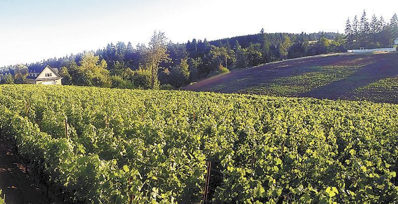The Rallison's 2-acre estate vineyard, Laree, was planted in 2008; Amies, located on the property's south side measures 1.5 acres. ##Photo Provided
