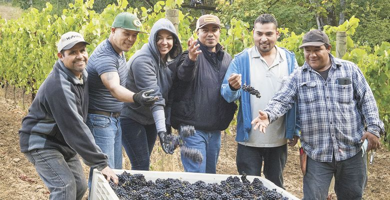 The harvest crew at Open Claim Vineyards pauses for some fun. ##Photo by Andrea Johnson