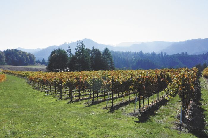 Brandborg Vineyards is one of several wineries that can now use Elkton Oregon, the state's newest AVA, to market their wines.