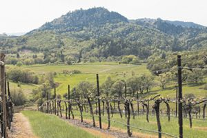 Abacela Vineyard in the Umpqua Valley AVA