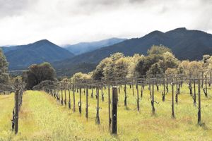 Woolridge Creek Vineyard in the Applegate Valley AVA