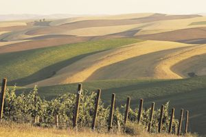 Spring Valley Vineyard in the Walla Walla Valley AVA