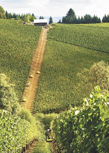 Archery Summit's Arcus Vineyard is one of the steepest in Oregon.