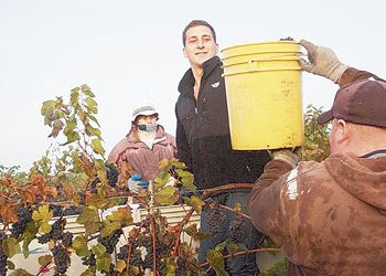 Sam Coelho helps with harvest as well as in the winery. Photo by Lauren Funtanella.