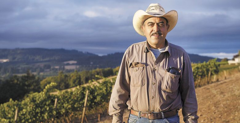 For 29 years, Salomon Orozco has been supporting his family picking grapes in Oregon — the last 24 of those years at Cristom in the Eola-Amity Hills. He works with his wife, son, nephews and nieces. He calls the grapes his babies; the wine industry, his family. ##Photo by Andrea Johnson