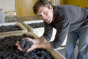 Drew Bledsoe during harvest at Artifex Wine Company in Walla Walla.