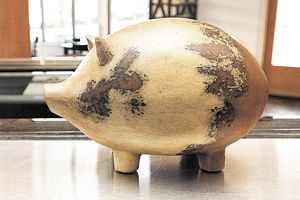 One of many pigs that