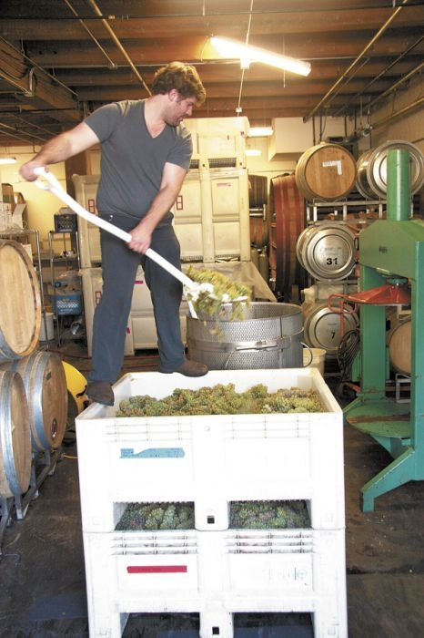 Jesse Skiles shovels white grapes into the press at his Southeast Portland winery, Fause Piste. Photo by Szymczak.