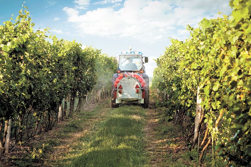 Tractor work is a part of farming grapes and can be a challenging input to offset with its fossil fuel-burning carbon emissions. All growers have to figure this into their sustainability models. Spraying fungicides like sulfur is necessary to kill and prevent powdery mildew. ##Stock photo.