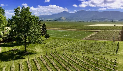 Hayworth Estate sports a regulation-sized football field next to its growing vines. ##Photo provided