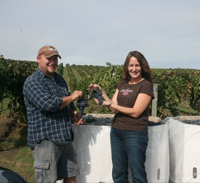 Bloomquist and Eckels harvest the grapes from their one-acre vineyard.  Photo provided.