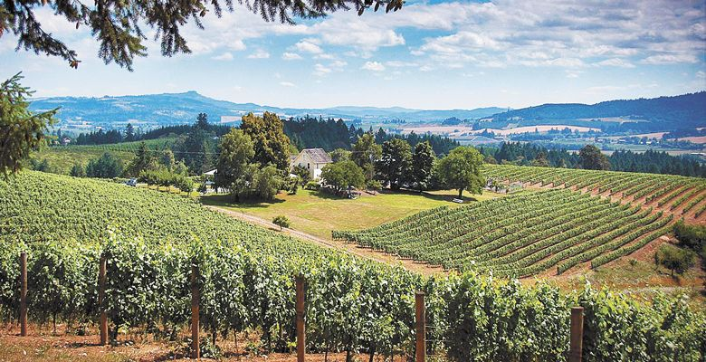 David Hill Vineyards & Winery, Willamette Valley. ##Photo courtesy of David Hill
