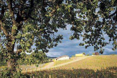 Together, Somers and Loosen purchased a beautiful 40-acre property on Chehalem Mountain in Newberg, which is now the