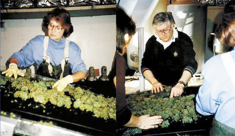 Grace and Ken Evenstad sort grapes during the 1990 harvest. ##Photo courtesy of Domaine Serene