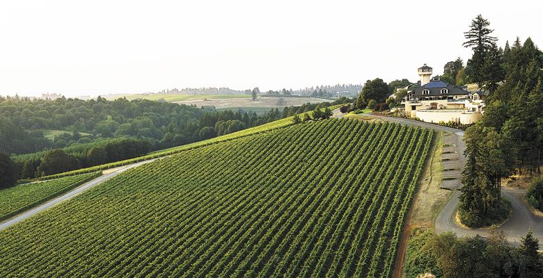 Willamette Valley Vineyards ##Photo by Andrea Johnson
