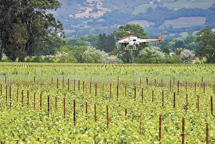 U.C. Davis researchers test a remote-controlled helicopter made by Yamaha to spray pesticides on vineyards.