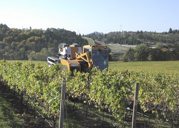 Ken Johnston's mechanical harvester picks fruit at an eastern Willamette Valley vineyard. Photo provided by Winemakers Investment Properties.