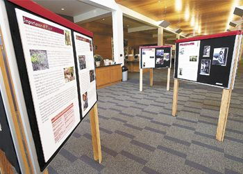 Free-standing displays present photos and