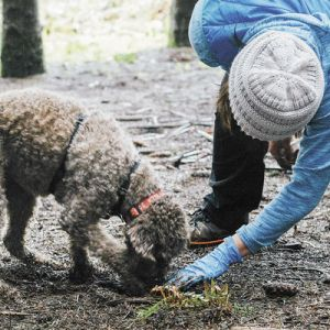 A Forage and Feast participant works with her dog during one of the truffle hunts featured at this year's 2017 Oregon Truffle Festival. ##Photo by Kathryn Elsesser.