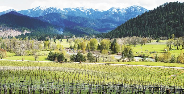 The Siskiyou Mountains provide a dramatic backdrop for Deer Creek Vineyards, located in the Illinois Valley, a southwestern region of the Rogue Valley. ##Photo by Kathryn Elsesser