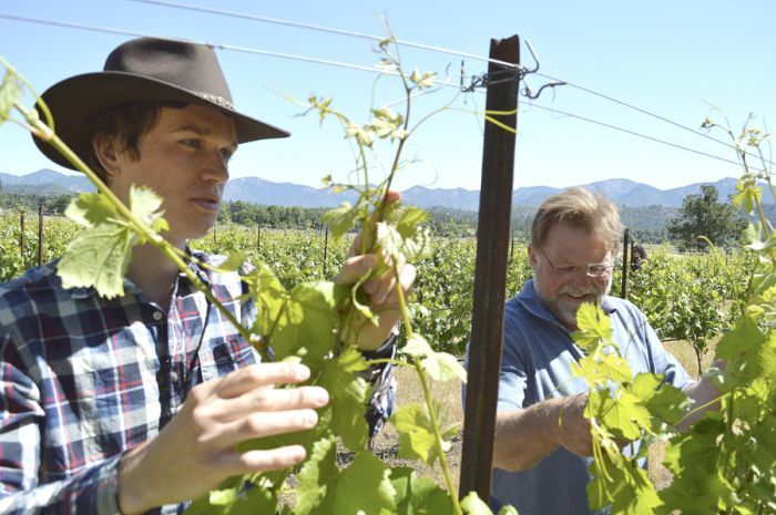 Bruno Carle works with Joe Ginet of Plaisance Ranch in Williams. Carle visited from France, where Ginet's cousin, Carle's dad, grows the same winegrapes. Photo courtesy of Mail Tribune/Janet Eastman.