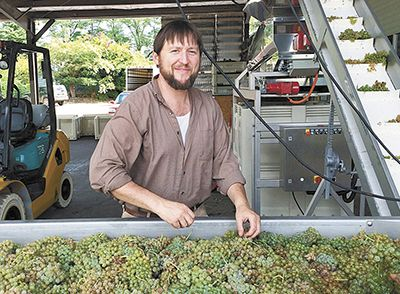 Winemaker Erik Brasher helps sort fruit at Lady Hill during this year's harvest. ##Photo provided