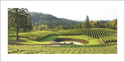 Alexana Vineyard, Dundee Hills. Photo by Andrea Johnson.