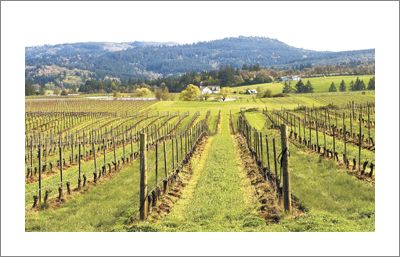 Bethel Heights Vineyard is located in the