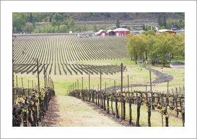 Del Rio Vineyard in the Umpqua Valley AVA, which is also part of the Southern Oregon AVA. Photo by Andrea Johnson.