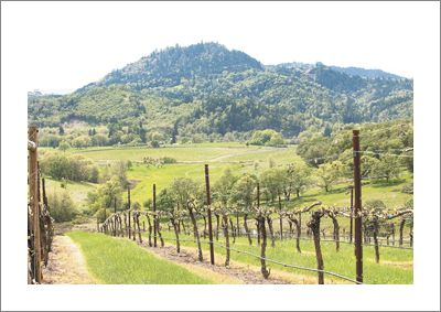 Abacela Vineyard in the Umpqua Valley AVA. Photo by Andrea Johnson.