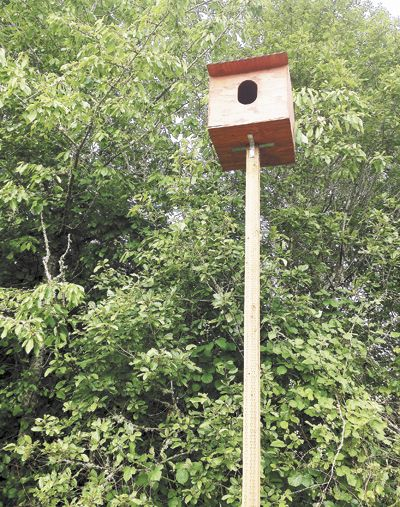Raptor Ridge has created owl boxes, giving the birds a place to roost and contribute to the vineyard s overall ecological balance.